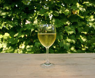 Glass of Vine with Wine Grape Background Stock Image