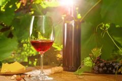 Glass of vintage red wine. On a table, grapevine on background. Outdoor shot stock images