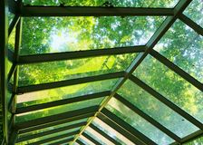 Glass Walkway Cover with Trees Stock Photos