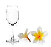 Glass of water and black with  white Tropical flowers frangipani Royalty Free Stock Image