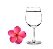Glass of water and frangipani flower Stock Image