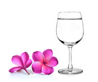 Glass of water and frangipani flower Royalty Free Stock Photos