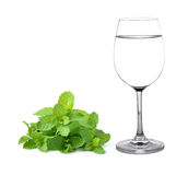 Glass of water and mint Royalty Free Stock Photography