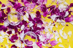 Water in drinking glass. Glass with water and peony flower petals on color background Royalty Free Stock Photography