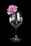 Glass with water and pink flower isolated Royalty Free Stock Images