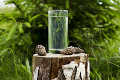 A glass of water on a stump. Surrounded by cones on a background of green spruce ans grass Stock Image