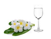 Glass of water and Tropical flowers frangipani Stock Photo