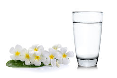 Glass of water and Tropical flowers frangipani Stock Images