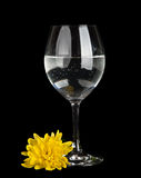 Glass with water and yellow flower isolated Royalty Free Stock Images