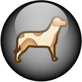 Glass Web Button Dog Stock Photo