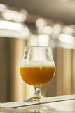 Glass of wheat beer at a brewery Stock Photography