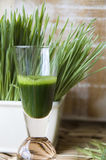 Glass of wheatgrass. Shot glass of wheatgrass with fresh wheatgrass background Stock Image