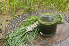 Glass of wheatgrass juice Royalty Free Stock Photos