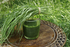 Glass of wheatgrass juice on a brown wooden table. With fresh wheat herbs and wheat spikelet against the background of a green wheat grass Royalty Free Stock Images