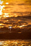 Glass of white vine with reflections of sun and sea on the backg Stock Photography
