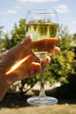 A glass of white wine Stock Image