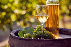 The glass of white wine with bottle on a wooden barrel. In a sunny day royalty free stock photography