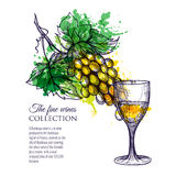 Glass Of White Wine With Branch Grapes Stock Photos