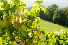 Glass of white wine exposed towards the sun, Royalty Free Stock Images
