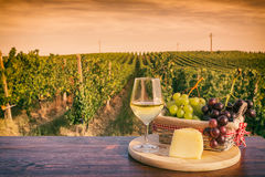 Glass of white wine in front of a vineyard at sunset Royalty Free Stock Images