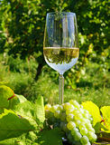 Glass of wine and grapes Stock Image