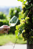 Glass of white Wine (Riesling) Royalty Free Stock Image