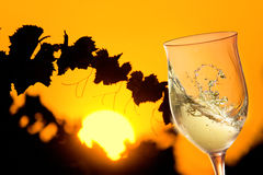 Glass of white wine in sunny vineyard with leaves in silouette royalty free stock photography