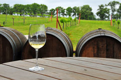 Glass of White Wine at the Vineyard. A glass of white sits on a table in front of a small vineyard Stock Images