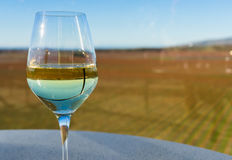 Glass of white wine and vineyard background Royalty Free Stock Image