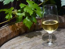 Glass of white wine on vintage old wooden barrel with grape leaves in the vineyard of Tenerife,Canary Islands,Spain. Copy space. Selective focus Royalty Free Stock Photos