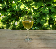 Glass of White Wine with Woodbind in Background Stock Photo