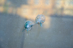 Glass window pierced by a two shot. Two bullet holes in the glass Royalty Free Stock Image