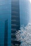 Glass windows centre business Stock Image