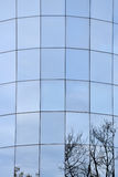 Glass windows facade of an office building reflecting trees royalty free stock photography