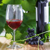 Glass of wine. Wine glass and a bottle on a wooden table. Outdoor shot of delicious alcohol drink Stock Photos