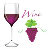 Glass of wine - Bunches of grapes vector Stock Image