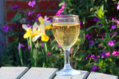 Glass of wine with colourful flowers in background. Stock Images