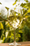 Glass of wine in garden. Glass of  white wine in garden vintage time Stock Photos