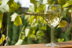 Glass of wine in garden. Glass of  white wine in garden vintage time Royalty Free Stock Images