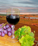 Glass of wine and grape Royalty Free Stock Images