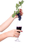 Glass of wine and grapes. Glass of red wine and grape hand thwarted Royalty Free Stock Photo