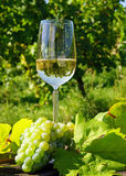 Glass of wine and grapes Stock Images