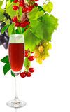Glass of wine and grapes closeup Royalty Free Stock Image