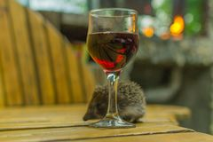 Glass of wine and a hedgehog royalty free stock photography