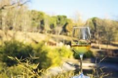 Glass of wine, landscape background Stock Image