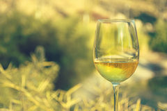 Glass of wine, landscape background royalty free stock image