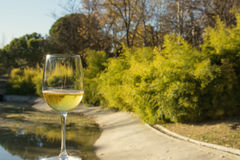 Glass of wine, landscape background Stock Image