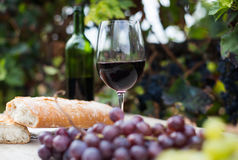 Glass of wine and ripe grapes in the vineyard Royalty Free Stock Image
