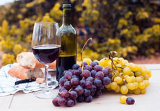 Glass of wine and ripe grapes in the vineyard Stock Image