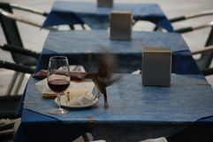 Glass of wine and sparrow Stock Photo